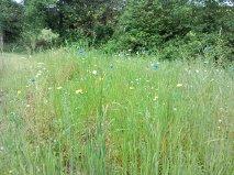 wild spring flower patch